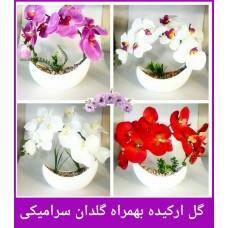 فروش عمده گل ارکیده بهمراه گلدان سرامیکی وارداتی